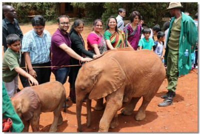 Devotees pamper the adopted elephants.