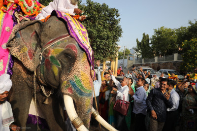A total of four elephants take part in the grand procession